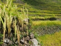 Batad Village Rice Field