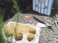 Drying Rice in the Sun